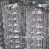 Top Quality Galvanized Spot Welded Wire Mesh in Rolls