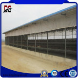 Large Span Steel Structure Poultry Chicken Farm Shed