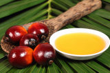 Malaysia Refined Rbd Olein Palm Oil Cp8 Specifications