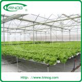 PP growing slot hydroponics system for lettuce farm