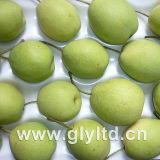High Quality Green New Shandong Pear