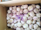 New Crop Normal White Garlic 5.0-6.0cm