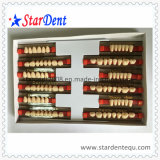 Three Layer Synthetic Resin Teeth of Dental Material