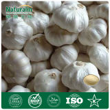 Hot Sale Garlic Extract 1% Allicin and Allin Powder