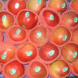 Fresh Red Gala Apple From China