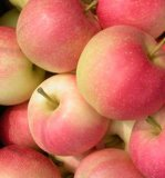 Fresh Gala Apple/Red Apple of China