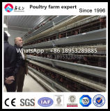 Totally Automatic Egg Collecting System for Chicken Farm