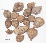 Rhizoma Sparganii Extract San Leng Extract
