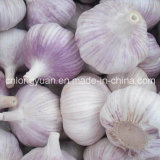 4.5cm, 5.0cm, 5.5cm Normal White Garlic