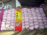 Hot Sales Chinese Garlic (1LB)