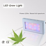 Blackstar 180W LED Grow Light, Full Spectrum for Flowering & Vegetable