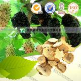 100% Pure Natural Herb Medicine Ramulus Mori