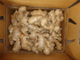 250g and up Air Dry Ginger for EU