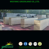 Special Size Film Faced Plywood for Construction Usage