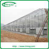 Multispan Glass Greenhouse with large size