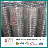 Stainless Steel Welded Wire Mesh Roll/Bird Cage Welded Wire Mesh Roll