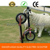 500W Ewasp Electric Brushless Motor Scooter
