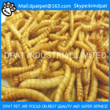 Oven Baked Dried Mealworm Wild Bird Food