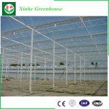 Turn Key Greenhouse for Turkey