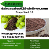 95% China Health Food Raw Materials Procyanidins/Grape Seed P. E