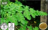 High Quality Moringa Leaf Extract 10: 1