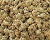 Notoginseng Extract/Notoginsenosides for Foods and Supplement
