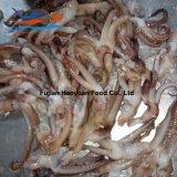 Block Frozen Fish Squid Tentacle