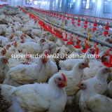 Automatic Poultry Feeders and Drinkers for Broiler Chicken