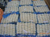 China Fresh Garlic - Spicy Vegetable for Export
