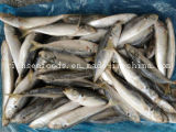 Hotsale Good Quality Frozen Round Scad