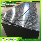 Film Faced Plywood/Shuttering Plywood at Competitive Price