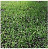 Grass Rubber Mat, Antibacterial Floor Mat, Drainage Rubber Mat