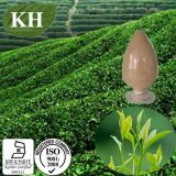 Green Tea Extract with Polyphenol 50%-98%, Catechins 30%-85%, EGCG 20%-60%