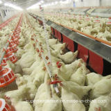 Automatic Poultry Equipment for Breeders