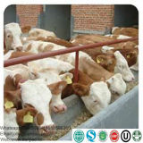 Calf Milk Replacer as Feed Additives