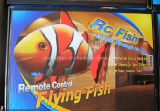 Nemo-Infra Red Control Fly Fish (QY-AM09A)