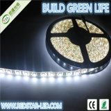 60LEDs/M IP65 5050 LED Strip