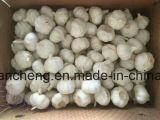 Garlic in Bags 10kg 20kg