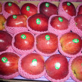New Crop Huaniu Apple