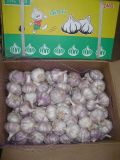 New Season Crop Garlic (4.5cm, 5.5cm, 5.5cm, 6.0cm)