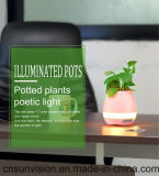 Home Decoration Music Flower Pot with LED Night Light