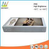 High Brightness Sunlight Readable 55 Inch Outdoor LCD Advertising Monitor (MW-551OB)