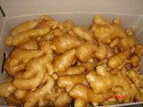 2017 New Crop Organic Fresh Ginger