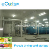 Super Low Temperature Cold Storage and Refrigerating System for Freeze Drying Vegetables, Fruits and Seafood