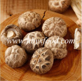 Bottom Price Dried Shiitake Mushroom with Halal Certificate