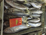 Chinese 20cm+ Frozen Horse Mackerel with Lowest Price
