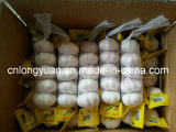 Chinese Fresh Garlic (4.5cm-6.0cm) with Small Packing