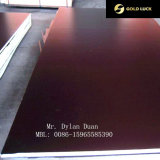 Black/Brown Film Faced Plywood Factory Building Material