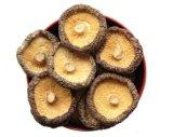 New Crop Dried Mushroom, Xianggu Juncaoshii-Takee Vegetables