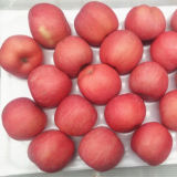Blush 100% Full Red Color FUJI Apple